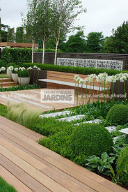Agapanthus, Ball shaped, Buxus, Contemporary garden, Evergreen, Sphere shaped, Topiary, Common Box, Wooden Terrace, Digital, ...