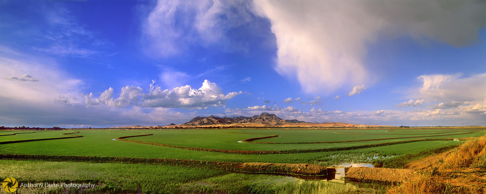Rice Field Panorama