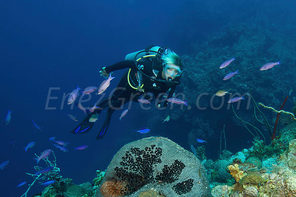 Grand Cayman diving pictures