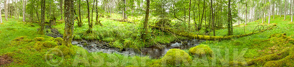 Water stream thourgh forest