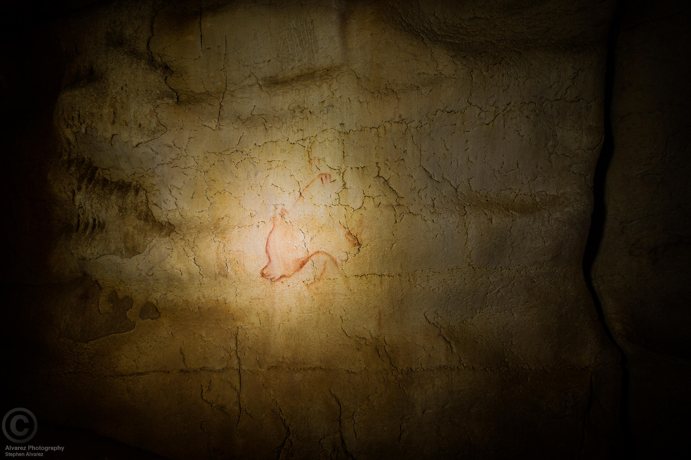 Cave bear drawn in red ochre on the wall of Chauvet Cave, Ardeche, France