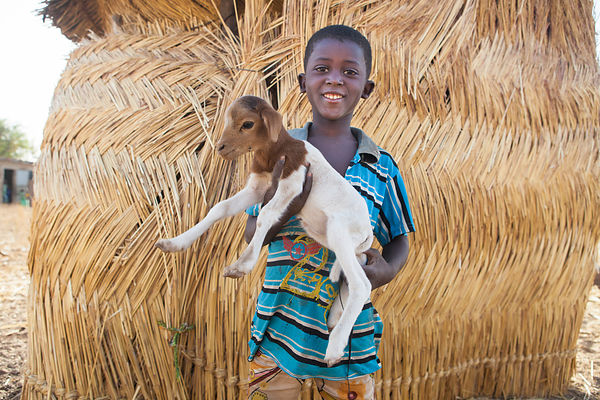 Omar, 6 ans, tient un chevreau dans ses bras Ponsom Tenga, Burkina Faso / Omar, 6, holds a young goat in his arms Ponsom Teng...