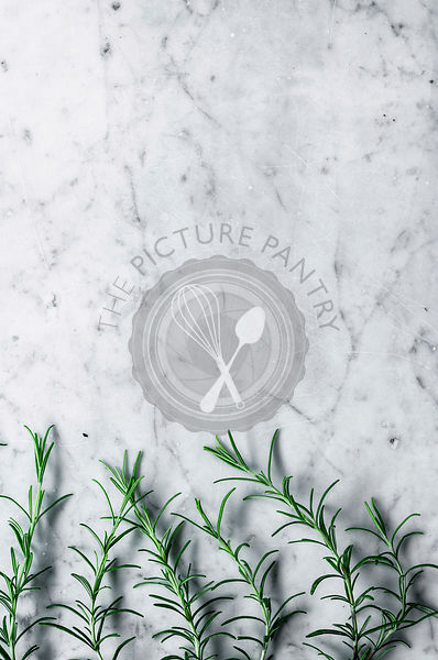 Rosemary row on marble background