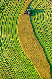 Aerial View of Rice Harvest #21