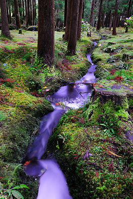 Brook at the Lagoa das Patas Nature Reserve. Terceira, Azores islands, Portugal