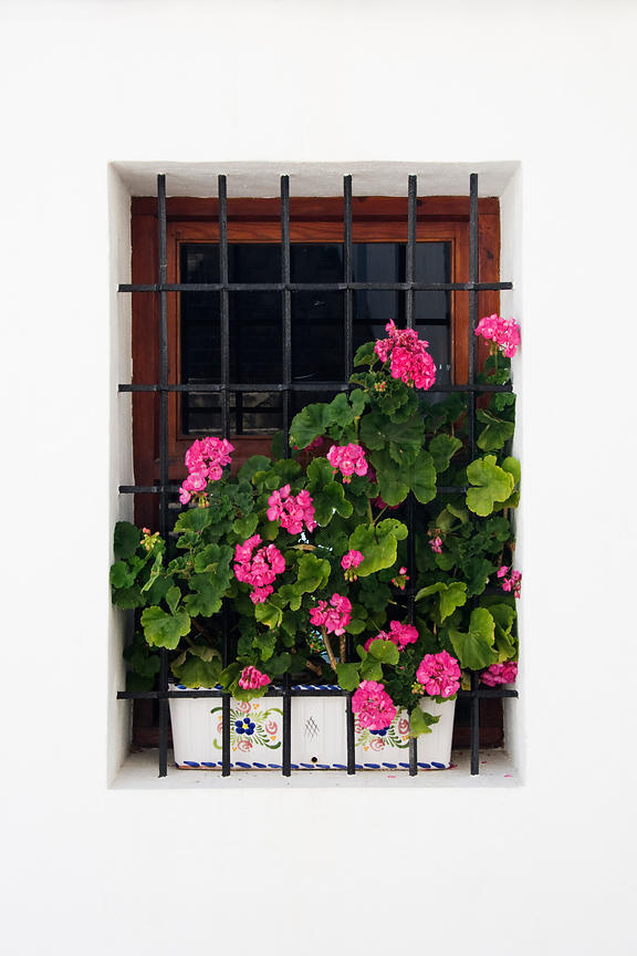 Window and Pot Plant Altea Valancia Spain