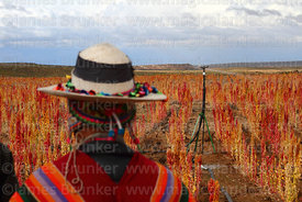 Aymara man wearing traditional dress watches demonstration of a sprinkler irrigation system in quinoa field, Oruro Department, Bolivia