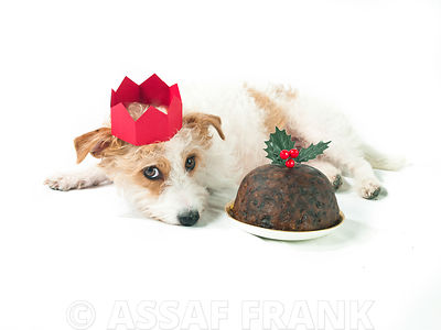 Dog and christmas pudding