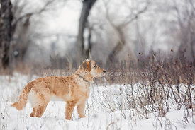 Profile of young dog in woods