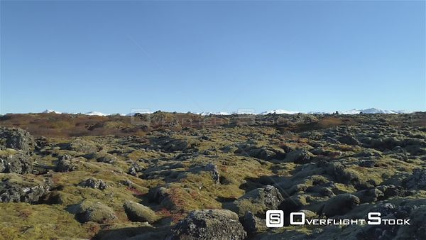 Flying Low Over Moss Covered Lava Field Autumn Colors Heidmork Iceland Drone Footage
