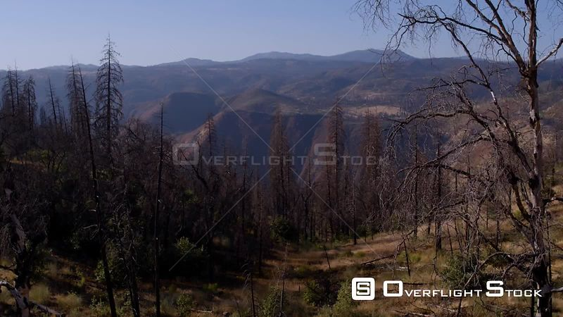 Sierra mountains forest fire region and regrowth floating through the trees. California