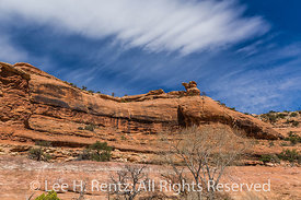 Road Canyon Landscape in Bears Ears National Monument