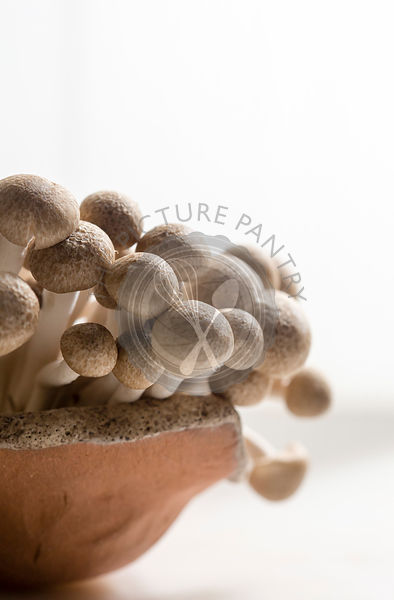 Speciality mushrooms in a ceramic tray still life macro shot