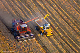 Aerial View of Rice Harvest #58