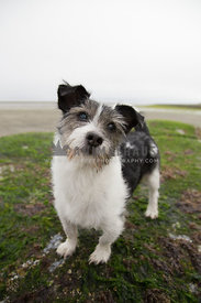 Jack russell terrier standing on a rock at the beach looking up