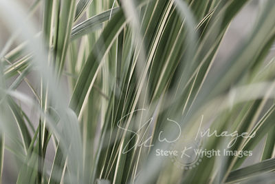 In Amongst The Sedge Grass