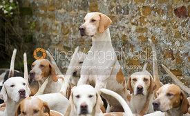 Cottesmore Hounds - The Cottesmore Hunt at Tilton on the Hill 10/11/12