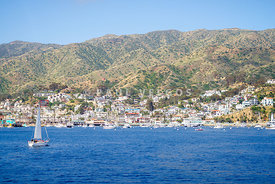 Catalina Island Avalon Harbor Photo
