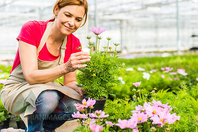 Woman in nursery examining flower