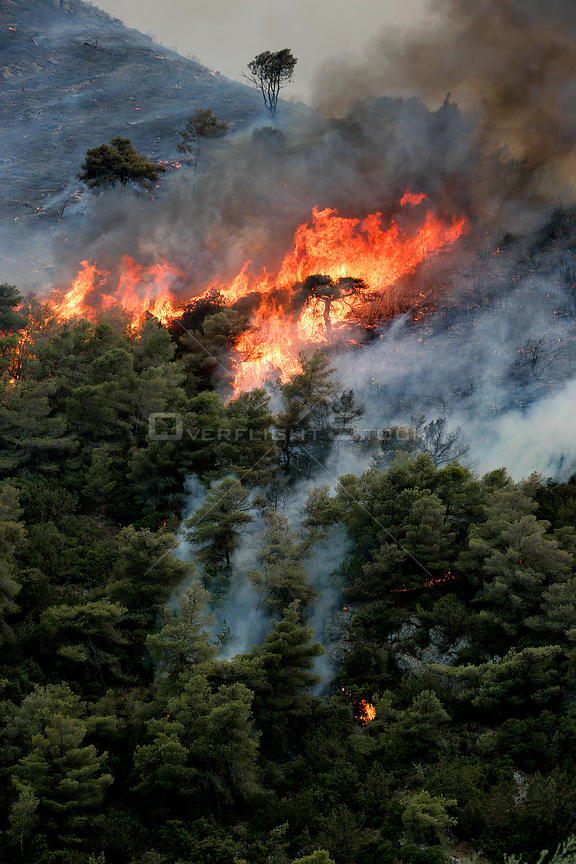 Mediterranean pines (Pinus halepensis) in forest fire, taken from the Patra Korinth Highway, Mount Klokos, Peloponese, Greece...