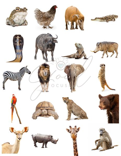 Collection of Different Zoo Animals