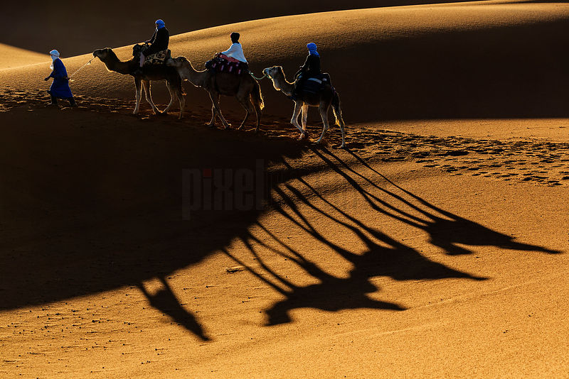 Berber Tribesman Leading Tourists on Camels