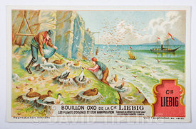 Trade card for advertising Bouillon extract, depicting collecting eider down