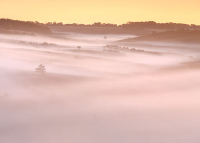 A huge blanket of dawn mist flows down the valley, leaving only trees and bushes rising above it. New Forest, Hampshire, UK