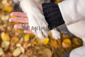 dog paw in girl's hand