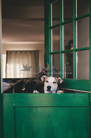 Dog standing up against green door welcoming his guests