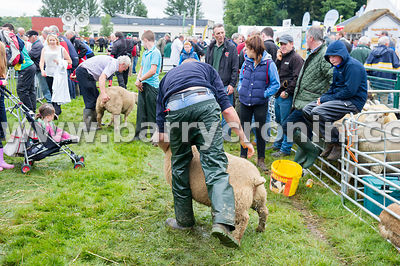 19th August, 2015.The 74th Virginia Agricultural Show, Virginia, County Cavan. Pictured is a farmer bringing a sheep for show...