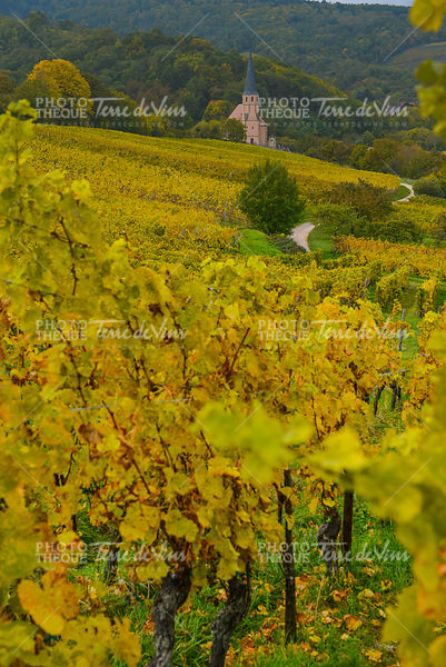 View of Andlau village and church in autumn, Alsace, France