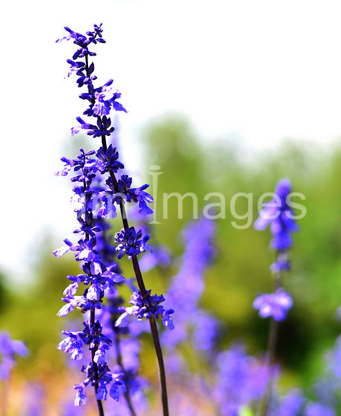 Flower Stock Photos: Purple flowers