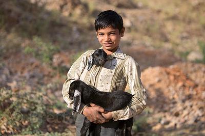 Brett Cole Photography | Goats Photo Gallery
