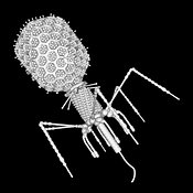 Bacteriophage T4 monochrome outline on black