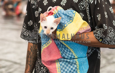 man with tattoos holding white cat