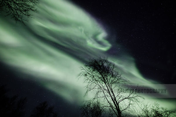 Aurora corona above the trees