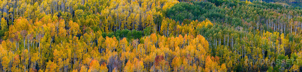 Color Palette Pano | San Juan Mountains, CO