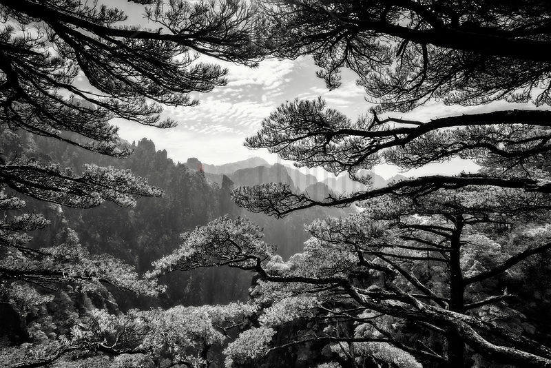 The Grand Canyou of the Huangshan Mountains Framed through Huangshan Pines