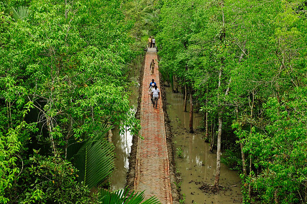 People crossing a raised walkway through a  mangrove swamp. The Sundarbans National Park. UNESCO World Heritage Site. June 2012.