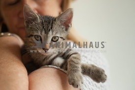 tabby-kitten-held-by-mom-in-window-light