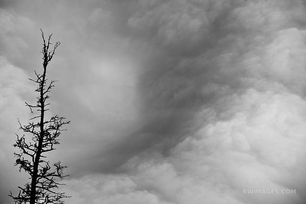 DEAD TREE AND THE STORMY SKIES ACADIA NATIONAL PARK MAINE BLACK AND WHITE