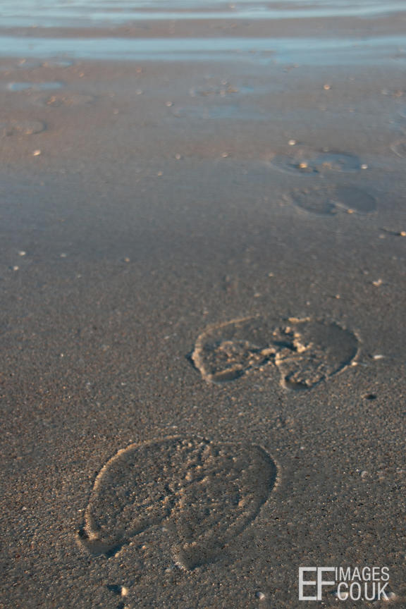 Camel Footprints In The Sand