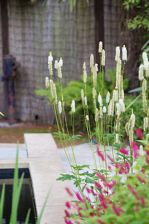 Sanguisorba canadensis and Persicaria by pond