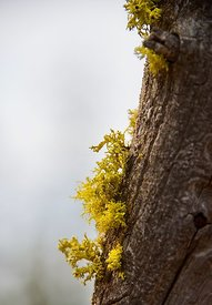 Lichen Camp Sherman