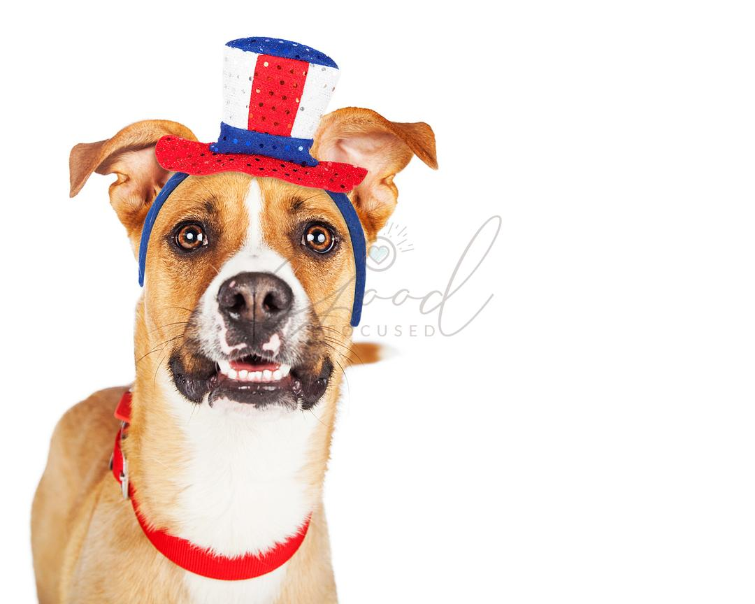 Funny American Patriotic Dog Closeup