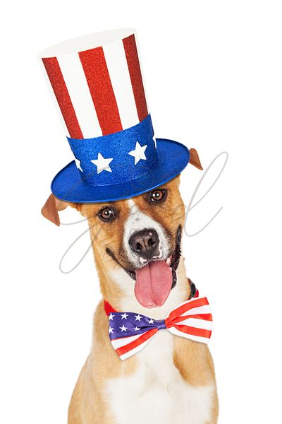 American Independence Day Dog