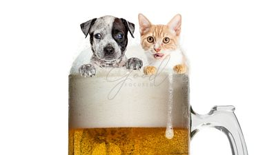 Funny Cat and Dog in Frosty Beer Mug