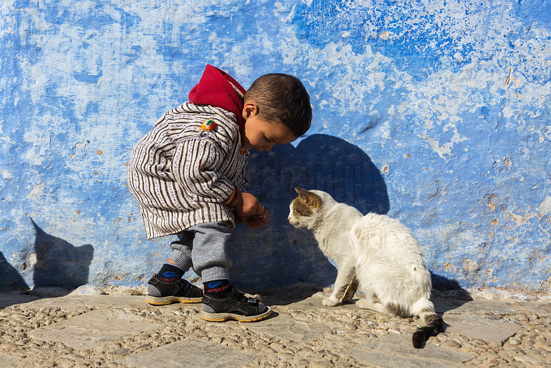 Young Boy Feeding a Street Cat