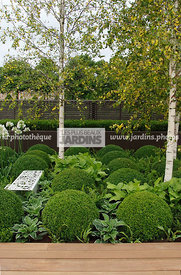 Ball shaped, Betula, Birch, Buxus, Contemporary garden, Sphere shaped, Topiary, Common Box, Digital, Formal garden, Scenery